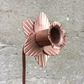Copper Daffodil Flower