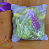 Small  Aromatic  French Lavender  Cushion
