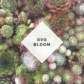 Ovo Bloom
