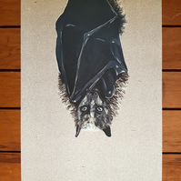 Bat Illustration - A4 Digital Wildlife Print