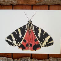 A5 Moth Illustration Print