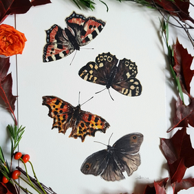 A4 Butterflies Print - Nature Illustration Wall Art