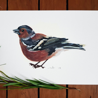 A5 Chaffinch Painting Print - Bird Illustration