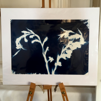 Cyanotype Large Mount (3)