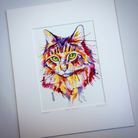 Rainbow Maine Coon
