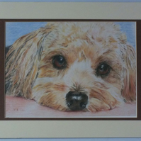 High quality print of a very cute dog in Coloured pencil