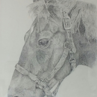 Original artwork - graphite pencil drawing of a horse's head