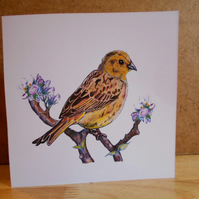 Handdrawn Yellowhammer Square Blank Card and Pack of 4 Cards