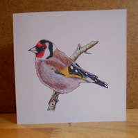 Handdrawn Goldfinch Square Blank Card and Pack of 4 Cards