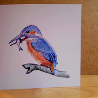 One Square Handdrawn Kingfisher Blank Greeting Card, Pack of 4, Ready to Post
