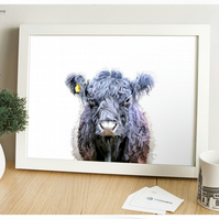 Belted Galloway Cow - Modern Digital Painting