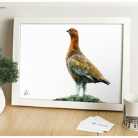 Famous Scottith Red Grouse - Modern Digital Painting