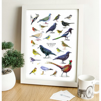 Garden Birds - British Fauna Collection