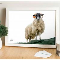 Sheep Painting, Blackface, Scottish Sheep, Farm Art, Livestock Illustration