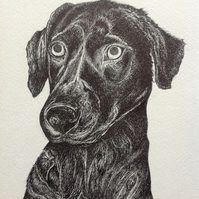 Capture the character of your pet in a commissioned Pawtrait ink or watercolour