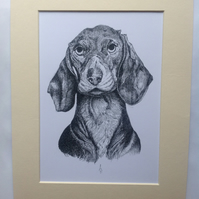 Daschund - Hand drawn ink illustration print with mount