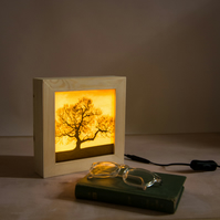 'That Magical Feeling', Wooden Lightbox featuring a Tree at Dusk