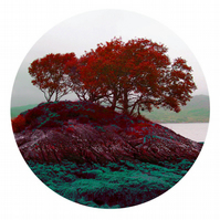 Morvern Peninsula - limited edition circular tree print. statement wall art