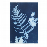 FERN & ASTRANTIA, unique nature blue print A4