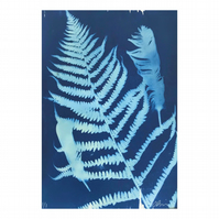 FERN WITH FEATHERS, cyanotype nature print, unique A4