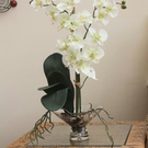 MOTH ORCHID IN CLEAR FOOTED-VASE