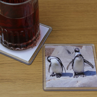 Nosey Penguin, Busy Penguin (Single Drinks Coaster)