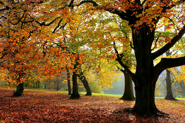Autumn Woodland Trees A4 Photo Print