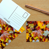 Autumn Leaves Postcards Set of 4
