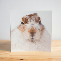 Snowy Mountain Hare Greetings Card