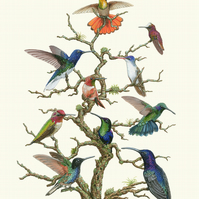 A1 'Hummingbird tree' Limited edition giclee art print