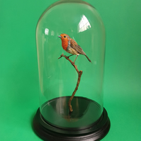 Hand made paper and wood European Robin mounted on branch in Bell jar