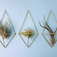 Geometric Wall Planter for air plants, Diamond shaped