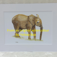 Professionally Printed A5 Print from an original watercolour Elephant Mounted A4