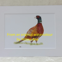 Professionally Printed A5 Print from an original watercolour Pheasant Mounted A4