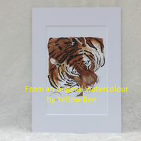 Professionally Printed A5 Print from an original watercolour Tiger Mounted A4