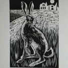 Night Hare