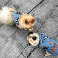 British Designed Blue Denim Vest Dog or Puppy Jean Jacket Coat with Patches