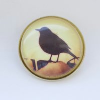 Blackbird on a wall brooch