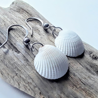 Cockle Shell Earrings