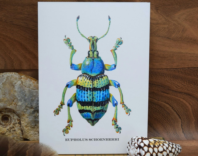 5 Beetle Insect greeting cards, Blank, Natural history, Stag beetles, Weevils