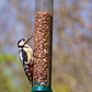 Woodpecker looking for nuts