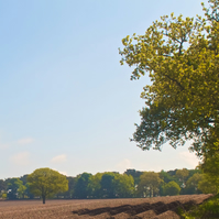 Ploughed Field and Treeline