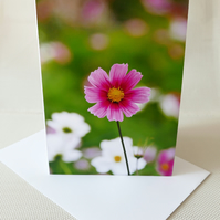 Greeting card, Blank greeting card, Birthday card, Suitable for all occasion,