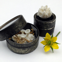 Lichen Specimens - miniature porcelain lichens in old watchmakers tins