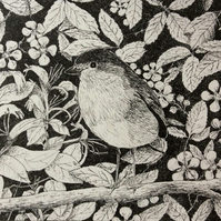Robin - original pen and ink drawing of this delightful little bird
