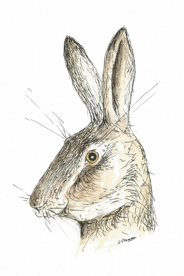Surprised Hare - print from original painting, animal