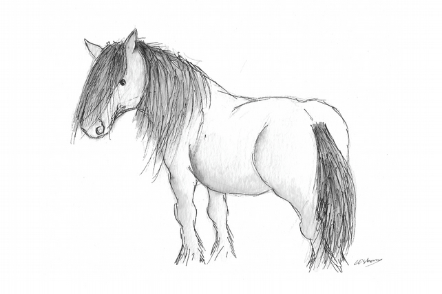 Highland Pony - print from original drawing