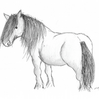 Highland pony - original illustration of pony