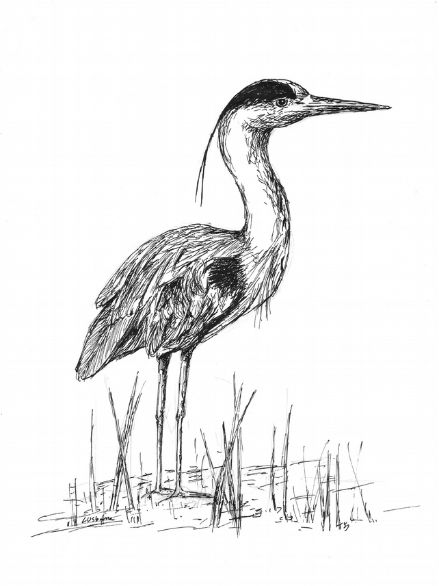 Just waiting... - print of heron from original drawing with mount