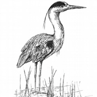 Just waiting... - print of heron from original drawing